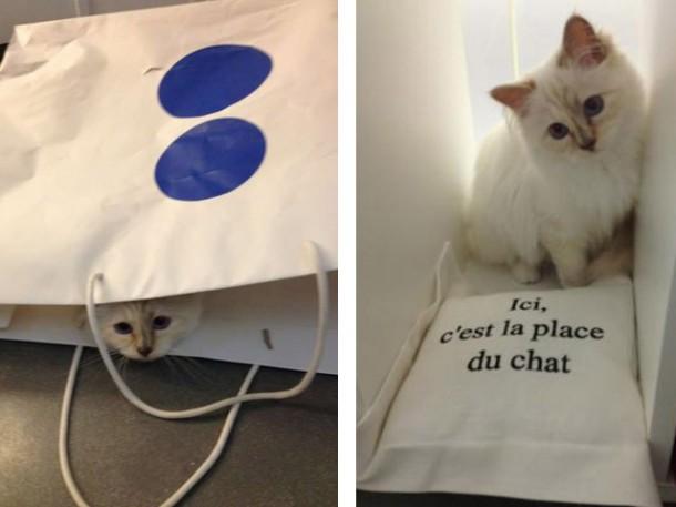 choupette 1 610x457 Zlá cica, Choupette Lagerfeld, útočí