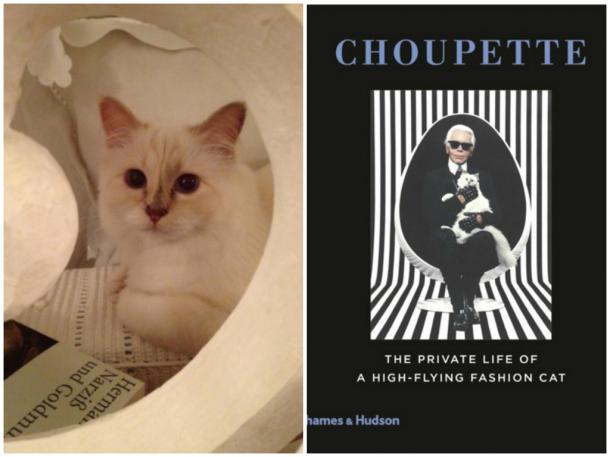 choupettebook 610x457 Zlá cica, Choupette Lagerfeld, útočí