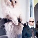 22052019 StajlSK Choupettee Lagerfeld 06 150x150 Štýlový život mačky Choupette Lagerfeld.