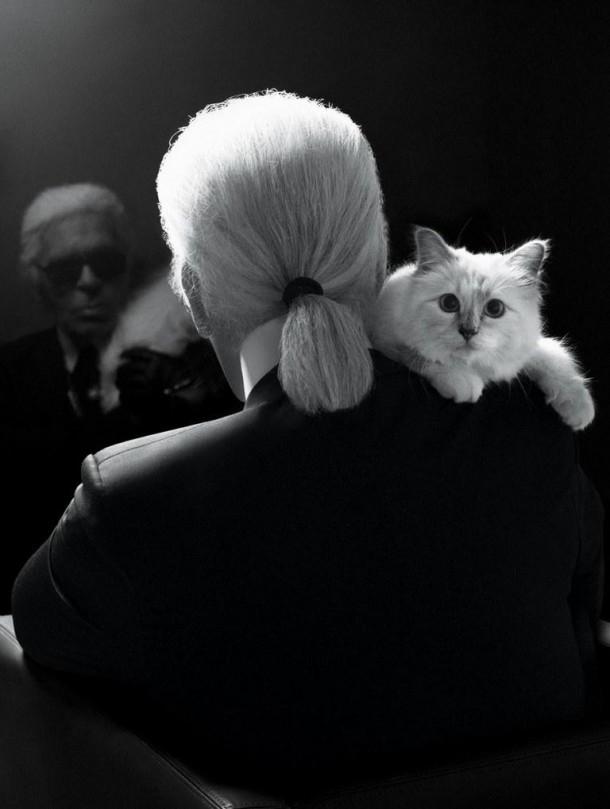 22052019 StajlSK Choupettee Lagerfeld 10 610x809 Štýlový život mačky Choupette Lagerfeld.